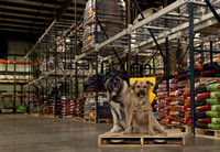 Lucy & Laika helping in the warehouse