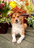 Dog Photography | Dog Photographer | Pet Photography | Pet Photographer | Nashville