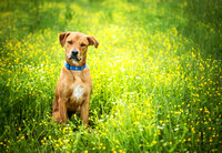 Dog Photographer | Dog Photographer| Pet Photographer