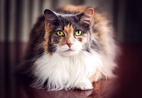 Cat Photographer | Cat Photography | Pet Photographer