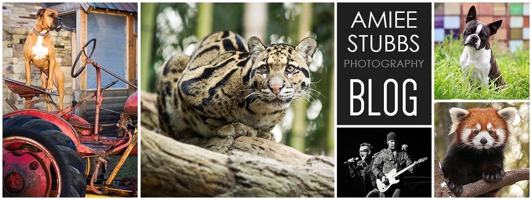 Amiee Stubbs Blog